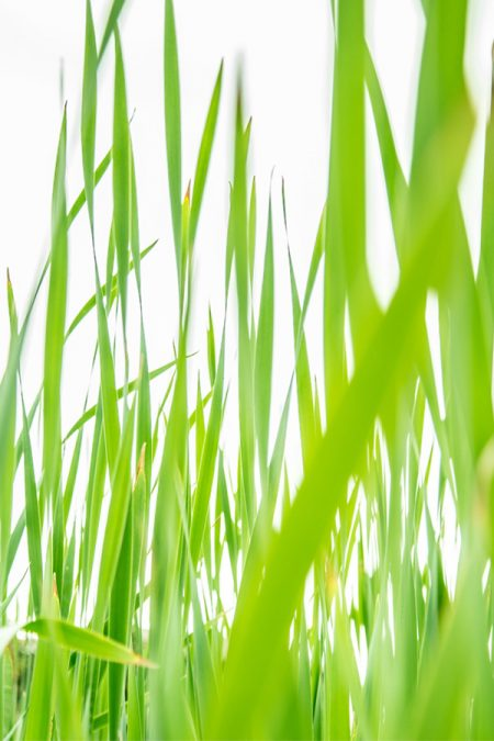 Homefoto-Gras-Klassieke-Homeopathie-Rijssen
